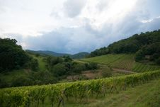 Free Alsace Landscape And Vinewyard Stock Image - 30065581