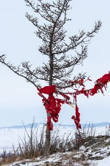 Free Ribbons On The Tree Royalty Free Stock Photography - 30066477