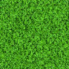 Free Green Meadow Grass. Seamless Texture. Stock Photo - 30083510