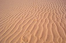 Free Footprints On The Beach Stock Photography - 30084632