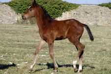 Free Young Horse Stock Images - 30089334
