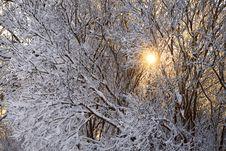 Free Winter Wood Stock Photography - 30089492