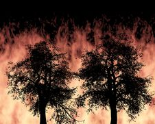 Free Forest Fire Stock Photography - 30091992
