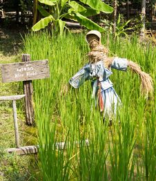 Free Scarecrow In Farm Stock Photo - 30097610