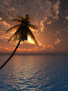 Free Palm Royalty Free Stock Photo - 3013295
