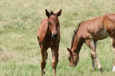 Free Foals In The Pasture Stock Photo - 3010190