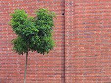 Free Bricks Wall Royalty Free Stock Photos - 3010598