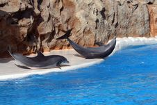 Free Two Dolphins On The Side Royalty Free Stock Image - 3010776