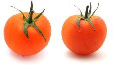 Free Tomato Royalty Free Stock Image - 3011566