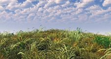 Free Green Grass Royalty Free Stock Photography - 3013327