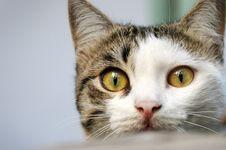 Kitten Looking At Camera Stock Photos