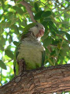 Free Green Parrot Stock Photo - 3015800