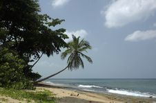 Free Tropical Beach 1 Stock Photography - 3016942