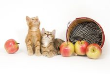 Kittens And Apples Royalty Free Stock Image