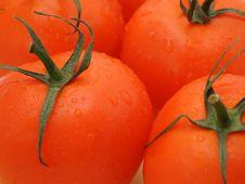 Free Tomatos Royalty Free Stock Photo - 3017245