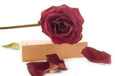 Free Old Rose Laying On Wood Stock Photos - 3017313
