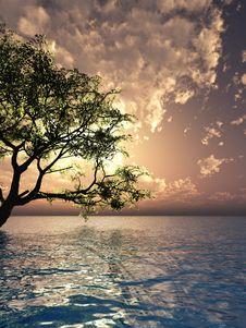 Free Old Tree Stock Photo - 3018840