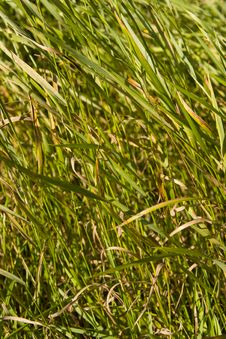 Free Grass Field Stock Photo - 3019100