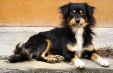 Free Village Dog Portrait Royalty Free Stock Image - 3019346