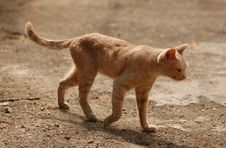 Free A Beautiful Cat Walking Royalty Free Stock Image - 3019476
