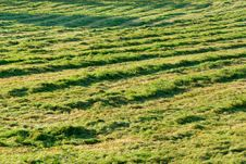 Free Fresh Mowed Hay In The Sunshin Stock Image - 3019971