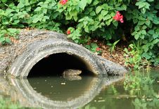 Free Drainage Pipe With Water Monitor Royalty Free Stock Image - 30114216