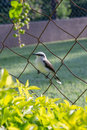 Free Bird Perching On A Fence Stock Images - 30125074