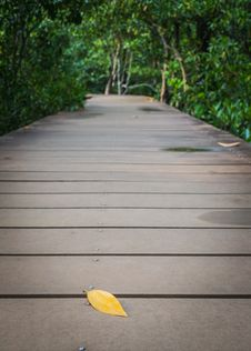A Leaf On The Wooden Walk Way Royalty Free Stock Photography