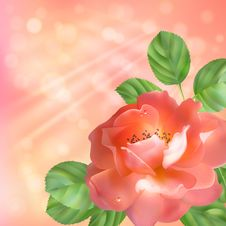 Free Floral Background With Rose, Sun And Blur Stock Photo - 30129880