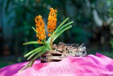Free Orchid Stock Photo - 30130640