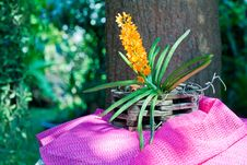 Free Orchid Royalty Free Stock Photos - 30130748
