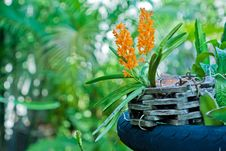 Free Orchid Stock Photo - 30131980