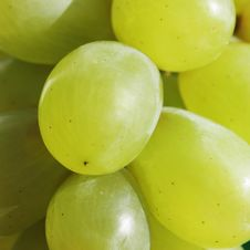 Free Bunch Of Grapes Stock Photo - 30133710
