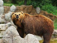 Free Kamchatka Bear Stock Photography - 30136322