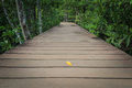 Free Wooden Walk Way Among The Forest Stock Photography - 30140262