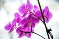 Free Beautiful And Fragile Orchid Flower Stock Image - 30141241