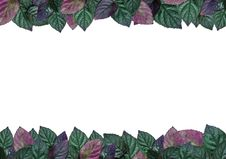 Leaves Border Royalty Free Stock Photography