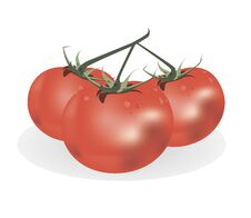 Free Red Tomato Stock Image - 30145431