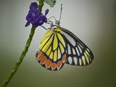 Free Butterfly On Flower Royalty Free Stock Images - 30147879