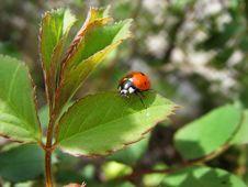 Free Bedbug On Sheet Royalty Free Stock Images - 30148259