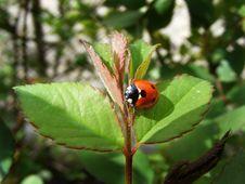 Free Bug On Sheet In Garden Stock Photo - 30148350