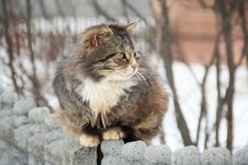 March Cat On The Walk Royalty Free Stock Photography