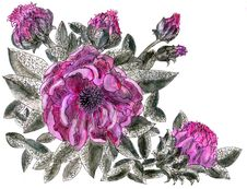 Peony Gothic Flower Stock Images