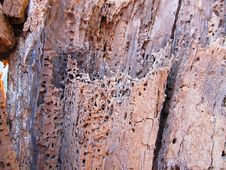 Free Rotten Wood Royalty Free Stock Photography - 30152097
