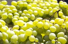 Free Grapes Isolated Royalty Free Stock Images - 30152259