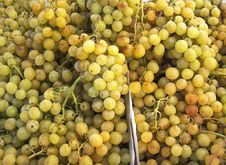 Free Grapes Isolated Stock Images - 30152364
