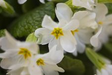 Free Spring Flowers Stock Images - 30157934
