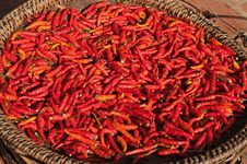 Basket Of Red Chili Peppers In The Sun. Royalty Free Stock Images