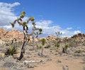 Free Desert Scene Stock Images - 30160674