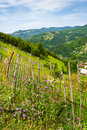 Free Wooden Fence In Mountains Stock Image - 30163611